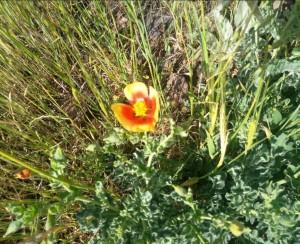 הפריחה שהחזיקה מעמד. צילום: יעל נשגב
