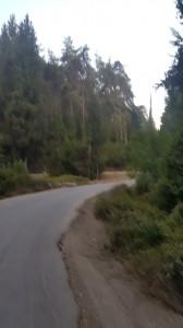 ועוד קצת יער. צילם: שמוליק הודס