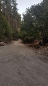 """כמה """"משעמם"""" הוא היער הירוק. צילם: שמוליק הודס"""