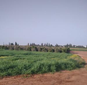 כפר מעש-שדות ושביל
