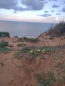 געש-חוף ים ופרחים צהובים