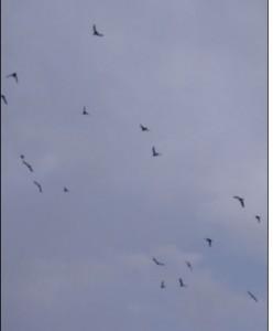 לאן הן בוחרות לעוף?